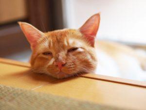 猫、風邪、ぐったり、リラックス