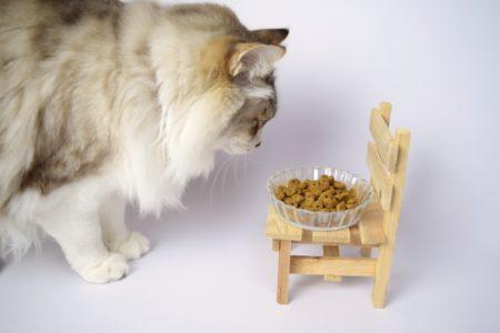 猫,キャットフード
