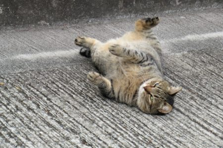 猫,道路,寝そべる