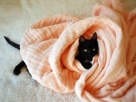 猫,毛布,布団,包まる