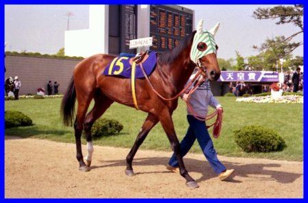 シンボリルドルフ,競走馬,名馬