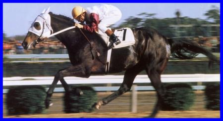 ハイセイコー,競走馬,名馬