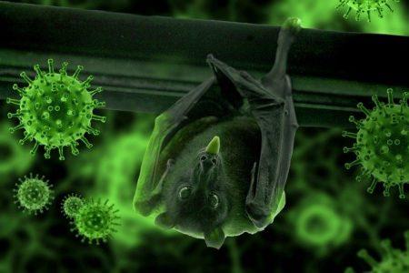 新型コロナウイルス,動物,コウモリ