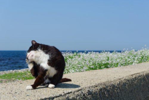 猫,耳かく