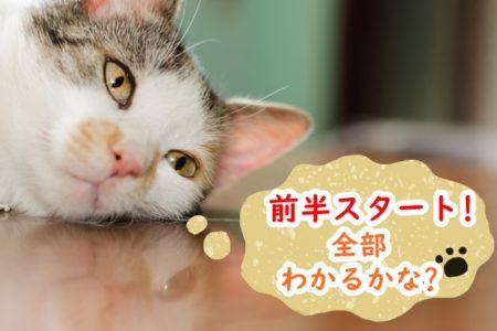 猫,ふきだし