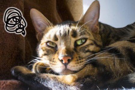猫,モヤモヤ,ふてくされる
