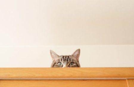 猫,隠れる