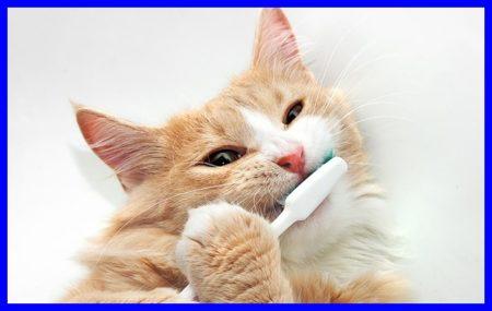 猫,歯磨き