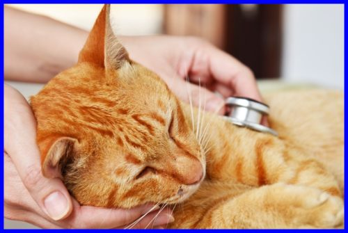 猫,気管支炎