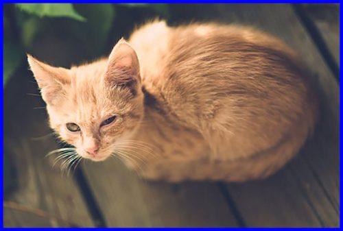 猫,まぶしい,結膜炎