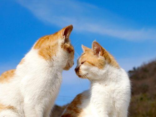 猫,野良猫,仲良し