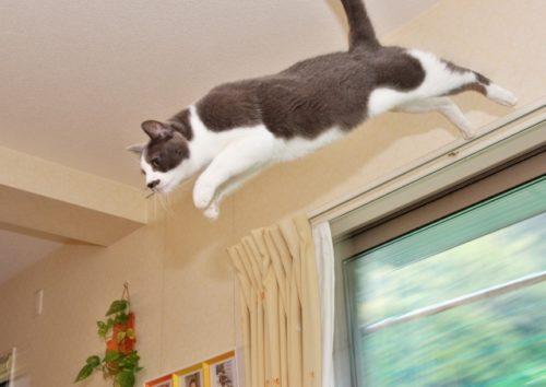 猫,ジャンプ