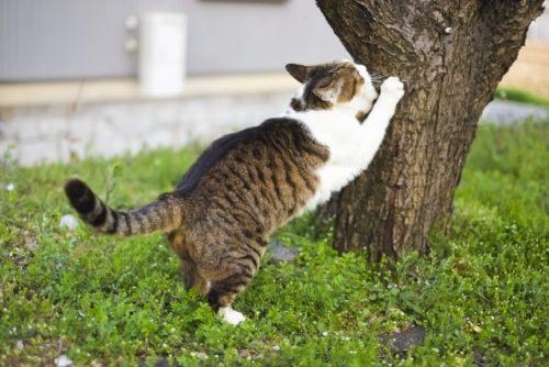 猫,つめとぎ