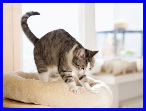猫,ふみふみ