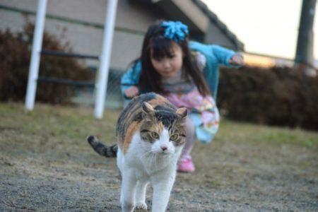 猫,逃げる