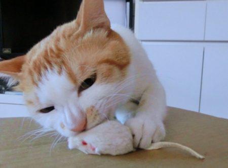 猫,おもちゃ