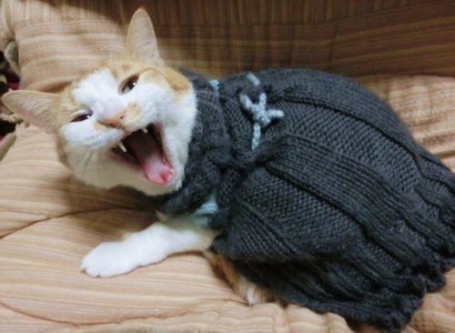 猫,あくび