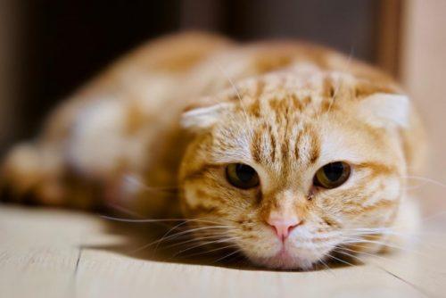 猫,イライラ