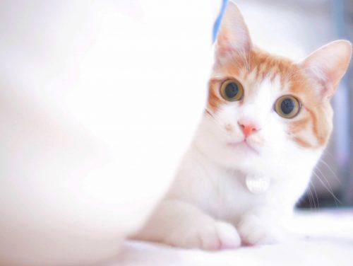 猫,びっくり