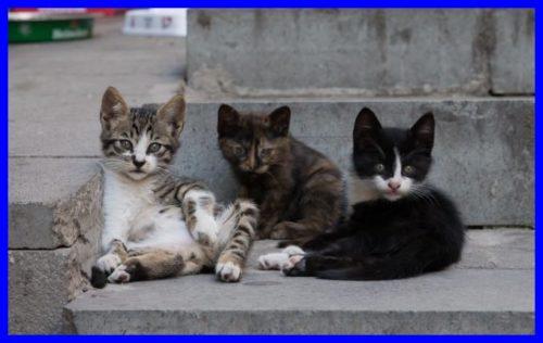 猫の集会,子猫