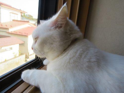 猫,外の世界