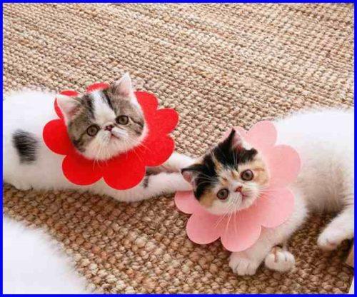 子猫,エリザベスカラー