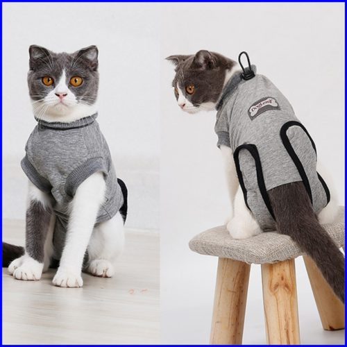 猫,術後服