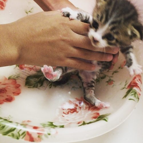 猫,お風呂