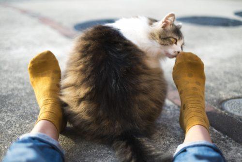 猫,ぽっちゃり
