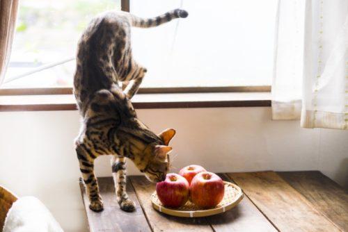 猫,りんご