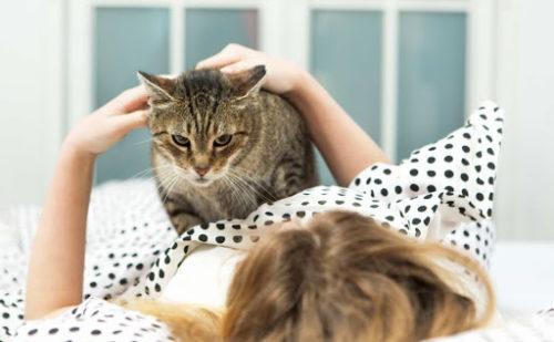 猫,起こしに来る