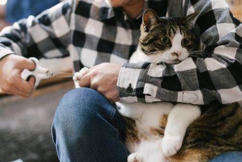 猫,爪切り