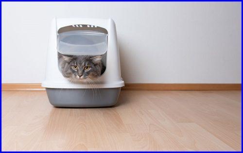 猫,トイレ