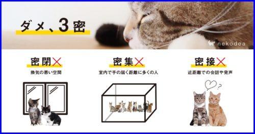 猫,ポスター