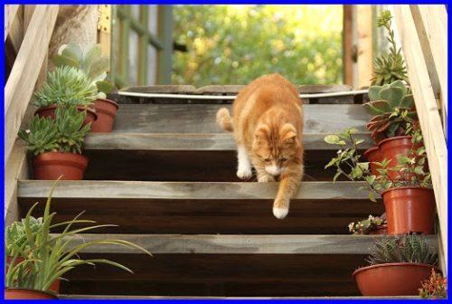 猫,高いところ