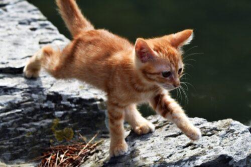 子猫,走る