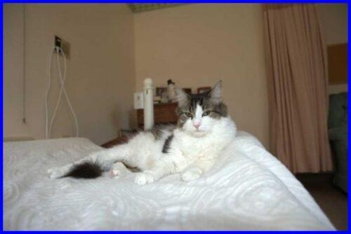 セラピー猫,オスカー