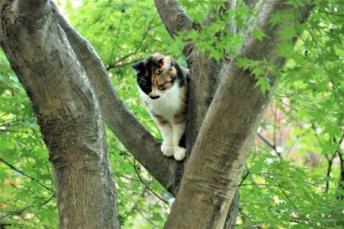 猫,木登り