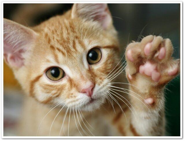 猫,パンチ