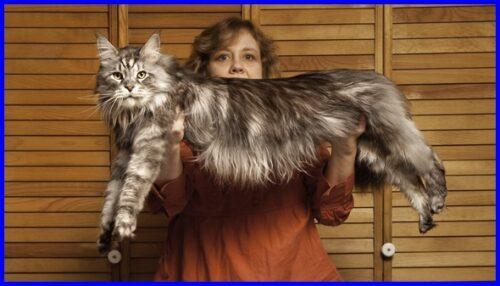 世界一長い猫