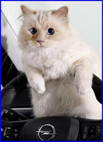 猫,世界一大金持ち
