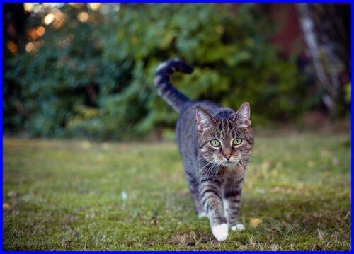 猫,世界一の移動距離