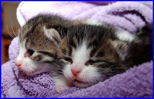 猫,高齢出産