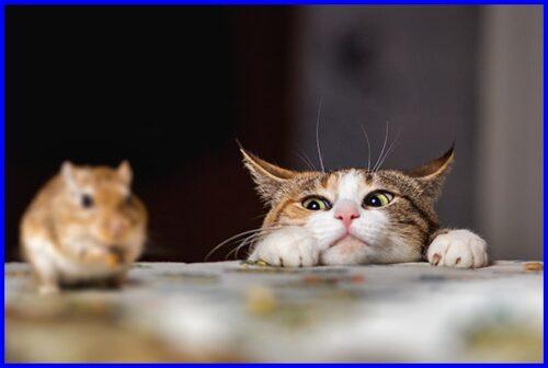 猫,ネズミ狩り